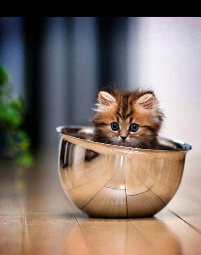 Too Cute Kittens Cutest Kittens Cute Cats