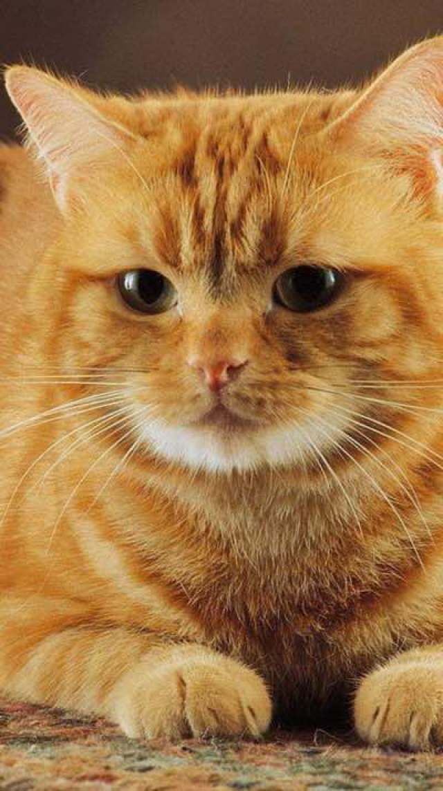 """* * GINGER KITTEH: """" Onlys whens weez become non-violent toward allz life wills we haz learned to live wells wif others."""""""
