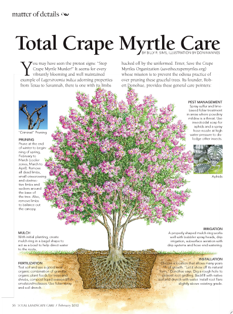 Tlc February 2012 Myrtle Tree Southern Landscaping Crepe Myrtle Trees