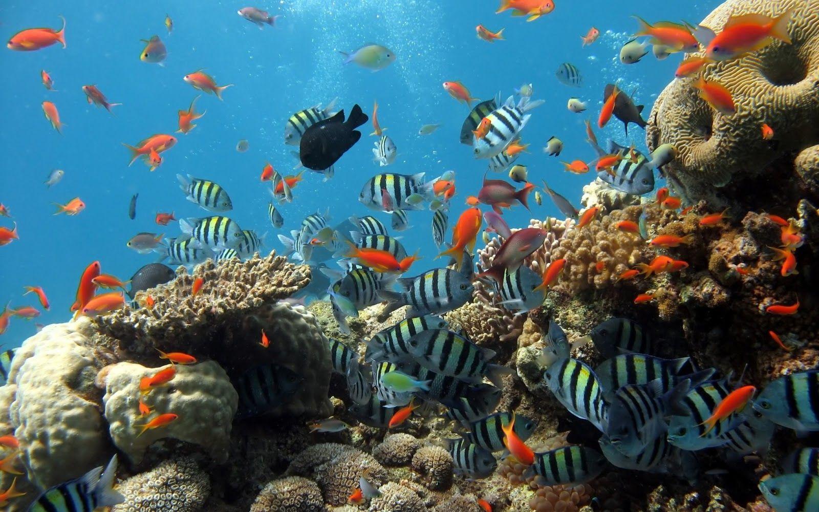 Vista de un arrecife de coral en el Sistema Arrecifal Veracruzano