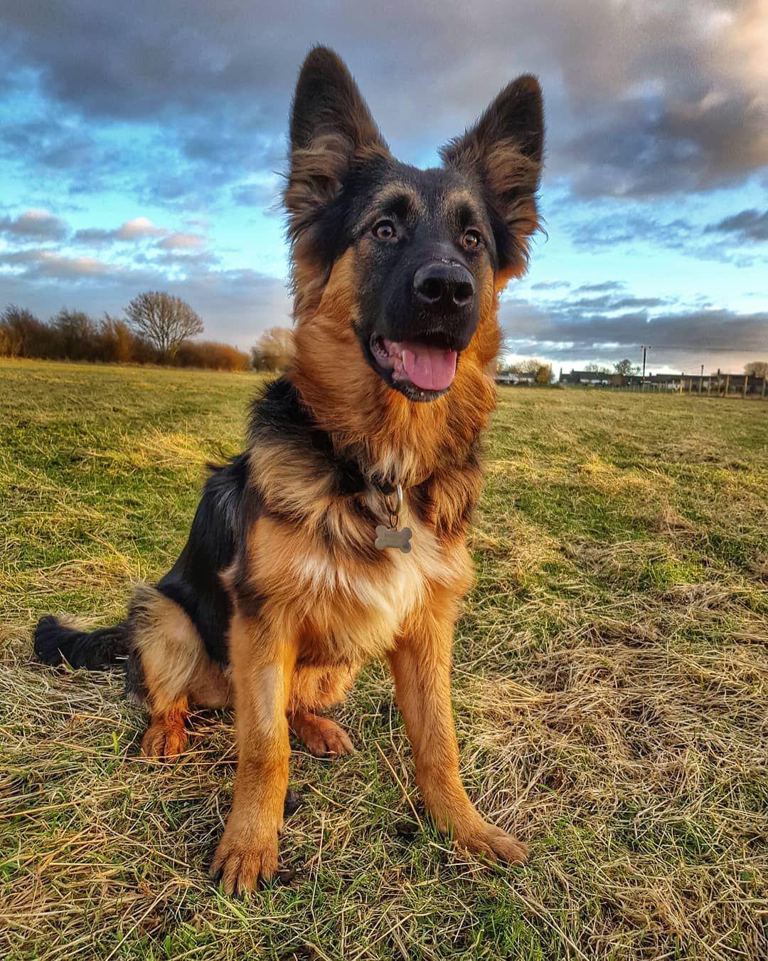 Shollie Named Moose Collie Mix Border Collie Mix Hybrid Dogs