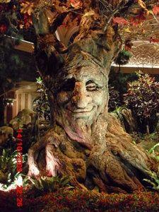 Goofy Tree Face Tree Faces Tree Sculpture Tree Art
