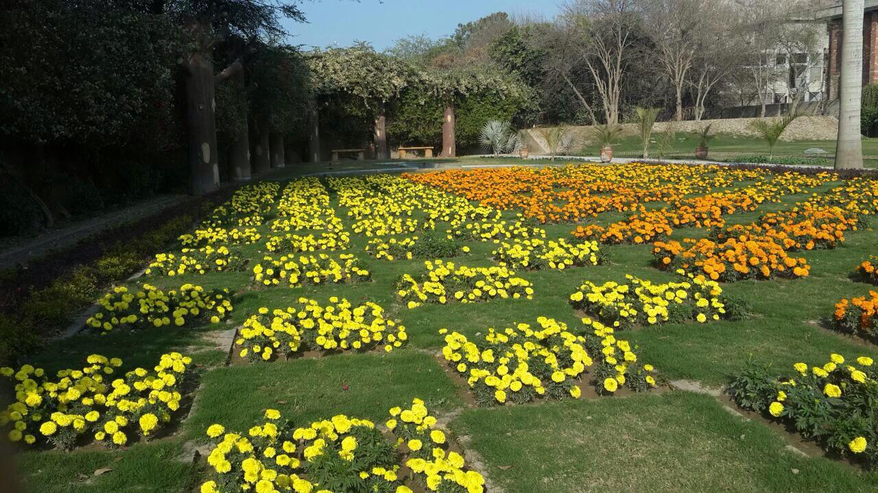 Flowers in desert Gulshan e Ahmad rabwah
