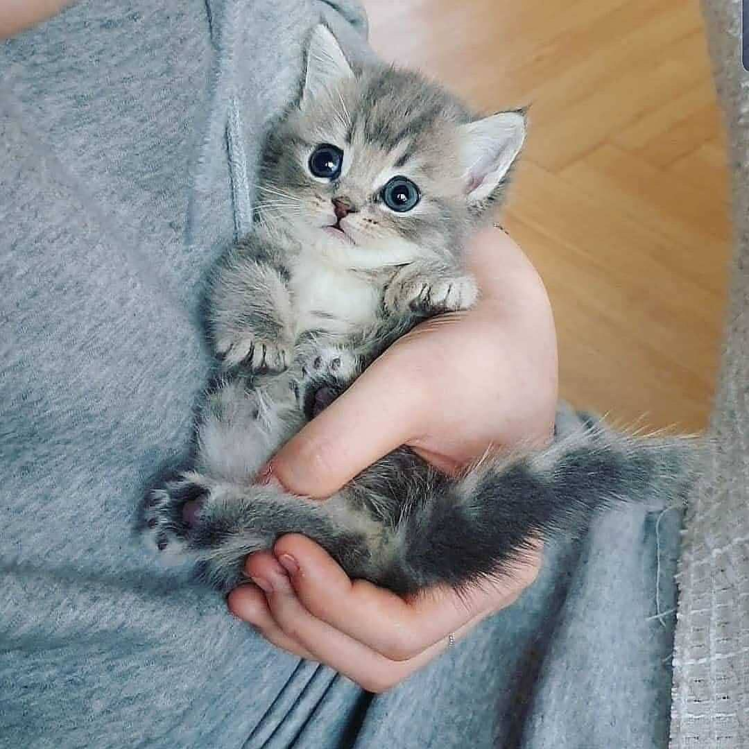 Follow Kittens Family For More Pics And Videos Share Love 3 In 2020 Baby Cats Cute Cats Kittens Cutest
