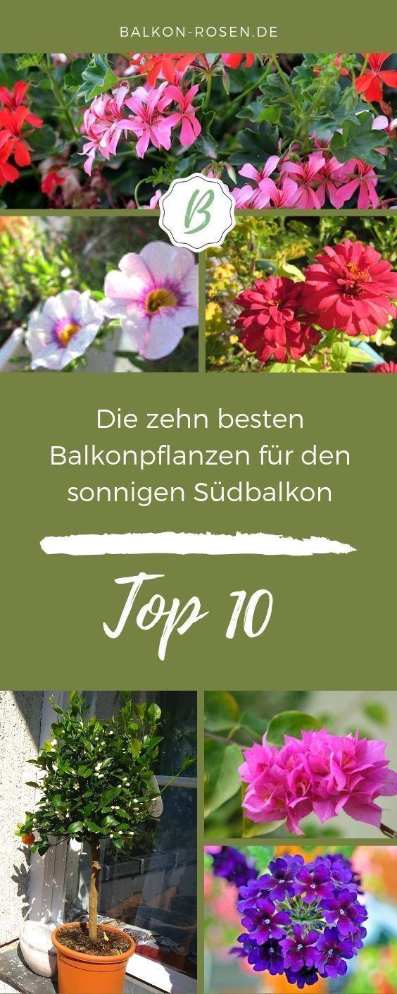 10 pflegeleichte Balkonpflanzen für die Sonne (mit Bildern