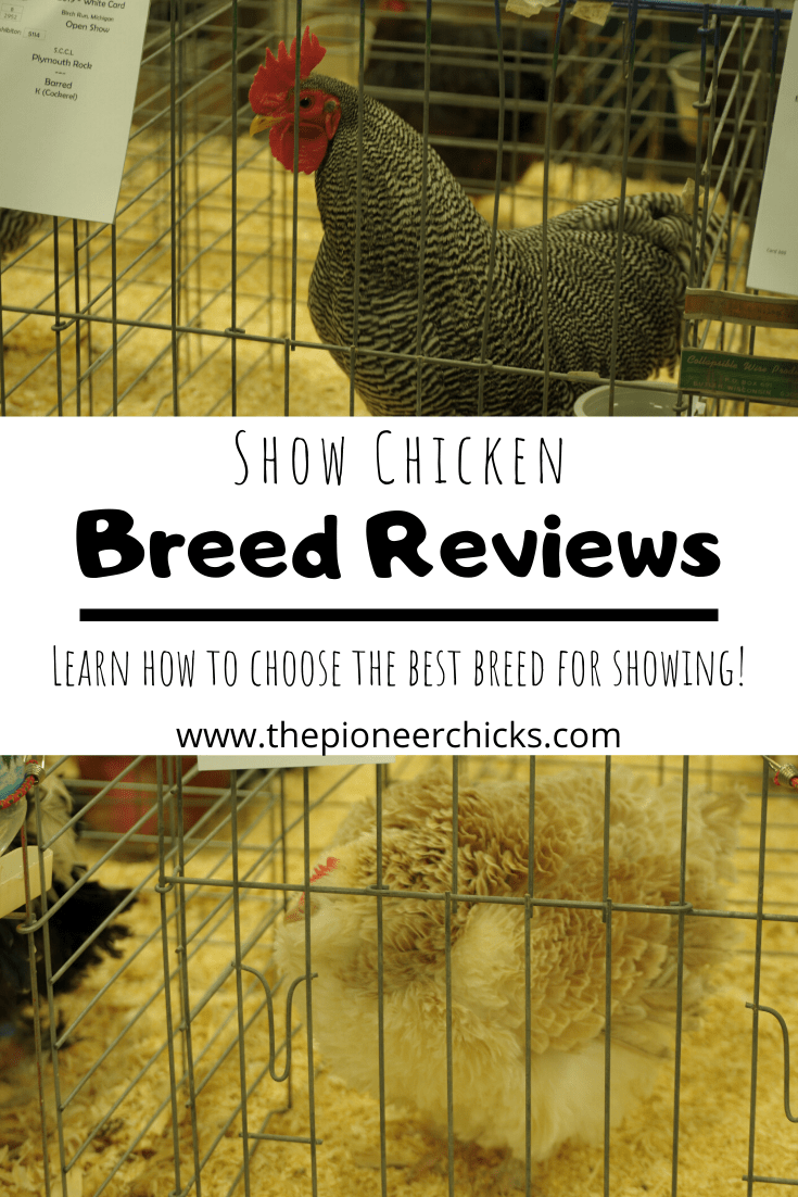 Show Chicken Breed Reviews in 2020 Chicken breeds
