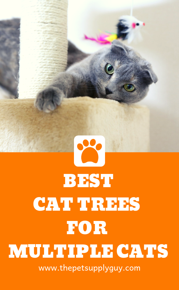 Best Cat Trees For Multiple Cats Cool Cat Trees Cool Cats Cat Tree