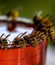 4 conseils de grand-mère pour éloigner les guêpes   – mouches guêpes moustiques