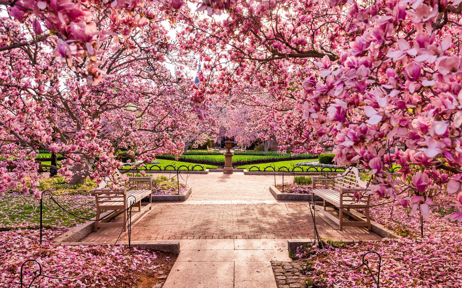 When Do Cherry Blossoms Bloom In Washington D C Cherry Blossom Pictures National Mall Washington Blooming Trees