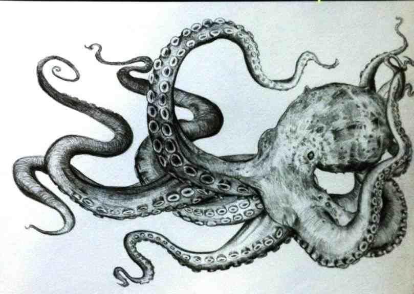 Kartinki Po Zaprosu Realistic Octopus Drawing Octopus Drawing Art Drawings Octopus drawing   octopus drawing, octopus sketch, octopus. pinterest