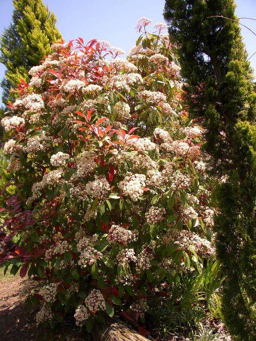 Se describen los arboles y arbustos mas apropiados al for Jardines con arboles y arbustos