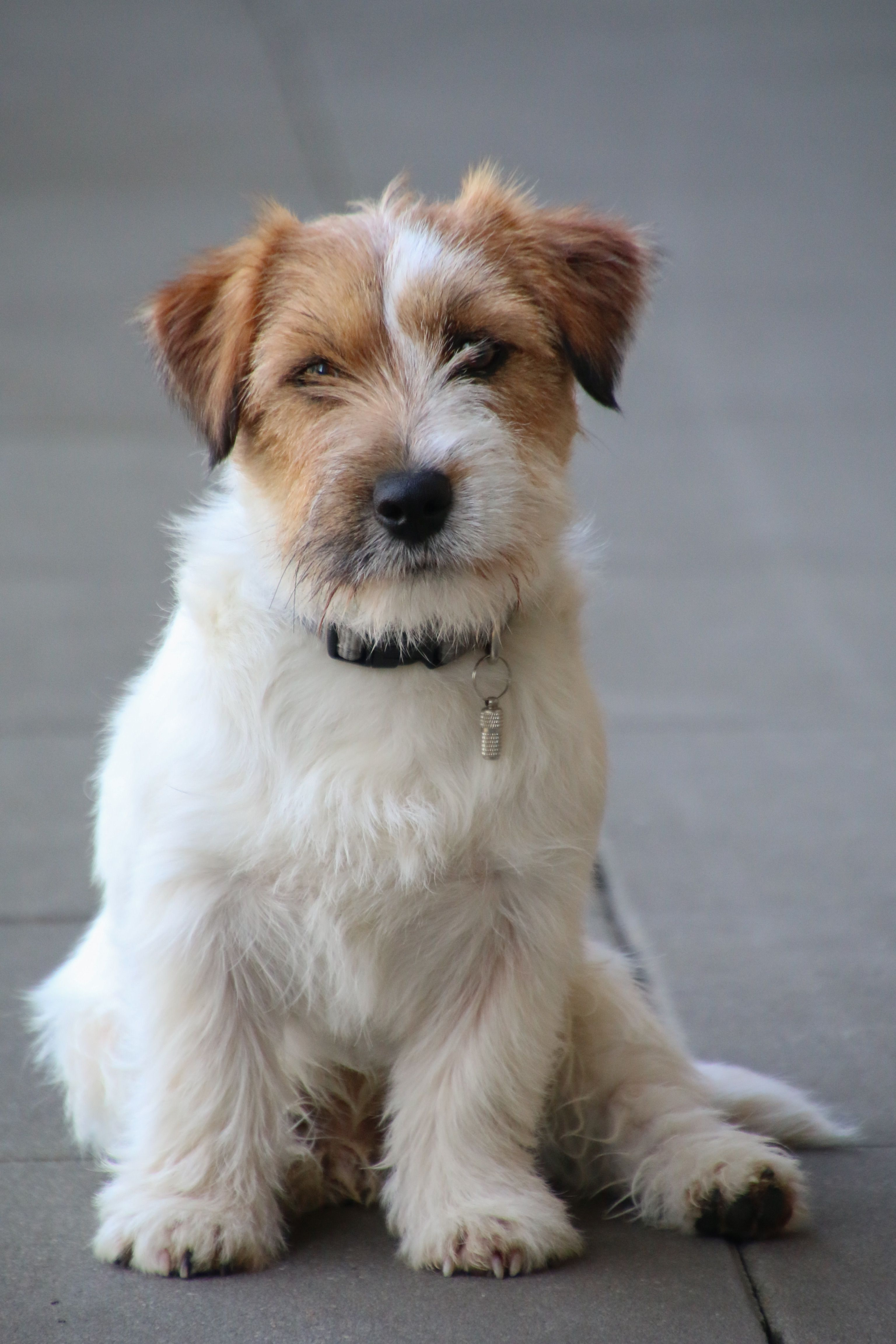 Pin By Holly Hepp On Jack Rusell Jack Russell Terrier Jack Russell Jack Russell Terrier Puppies