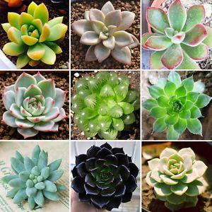 Image result for suculentas tipos plants pinterest for Tipos de cactus y sus nombres comunes