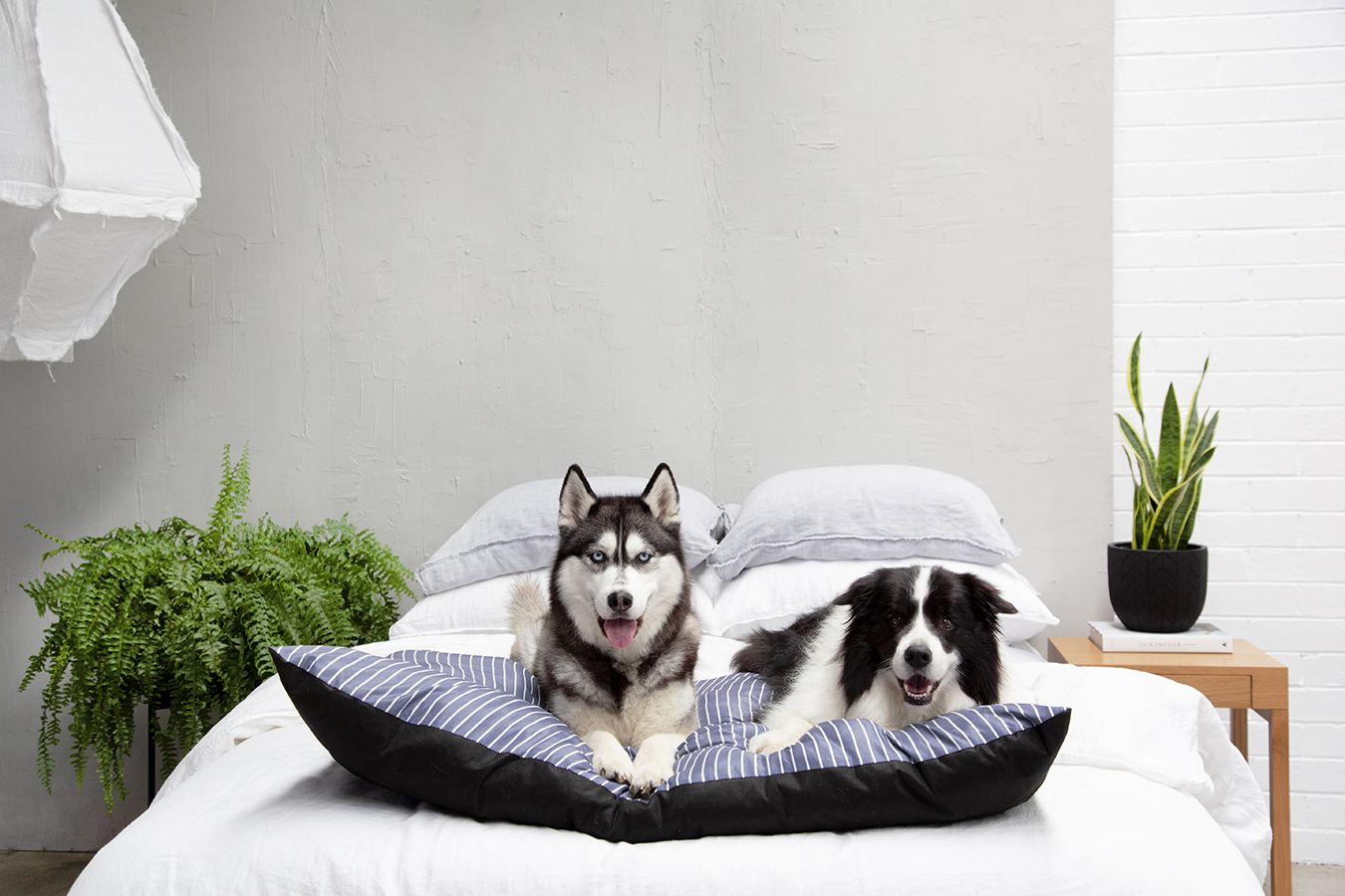 Happy Tails launches pet accessories collection at
