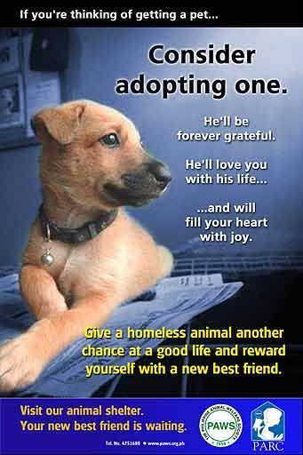 If You Are Thingking Of Getting A Pet Consider Adopting One Animal Advocacy Pets Dog Adoption