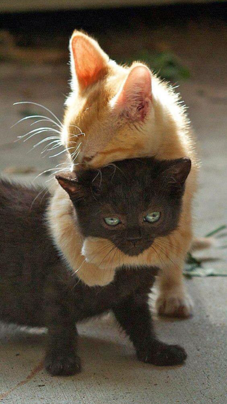Two Cats in 2020 Funny cute cats, Baby animals funny