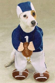 Funny Dog Costume American Football Sports Picture