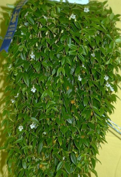 armar una planta colgante - Plantas Colgantes Exterior