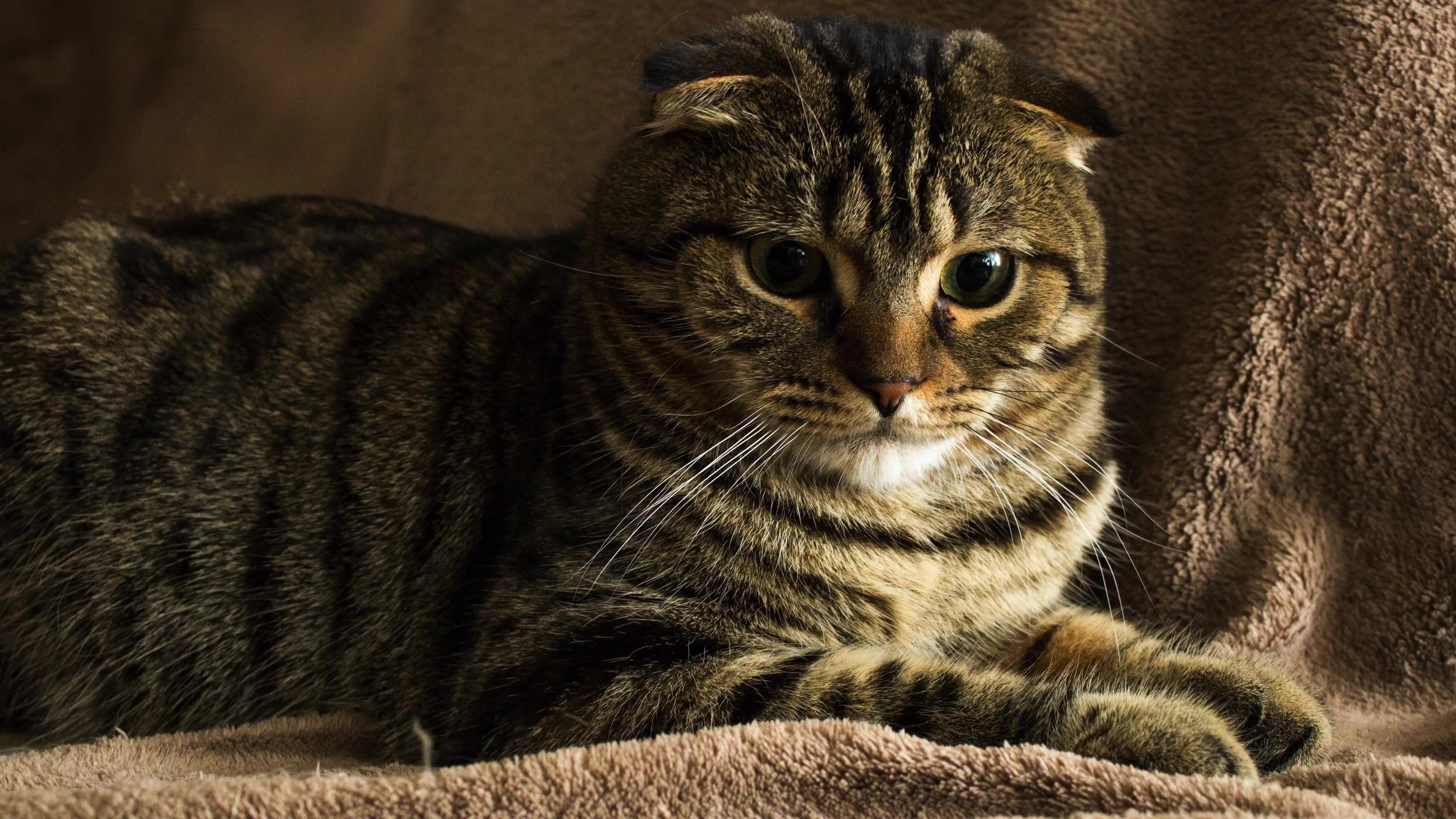Gatos Cats 4k Uhd Ultra High Definition Cats Pinterest
