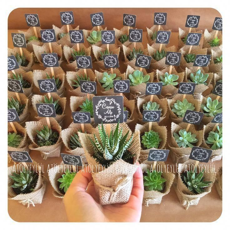 Mini Sukulent, Mini Succulent, Kaktus, Kaktus, Hochzeitsbevorzugungen, Hochzeits… – Brautkleider