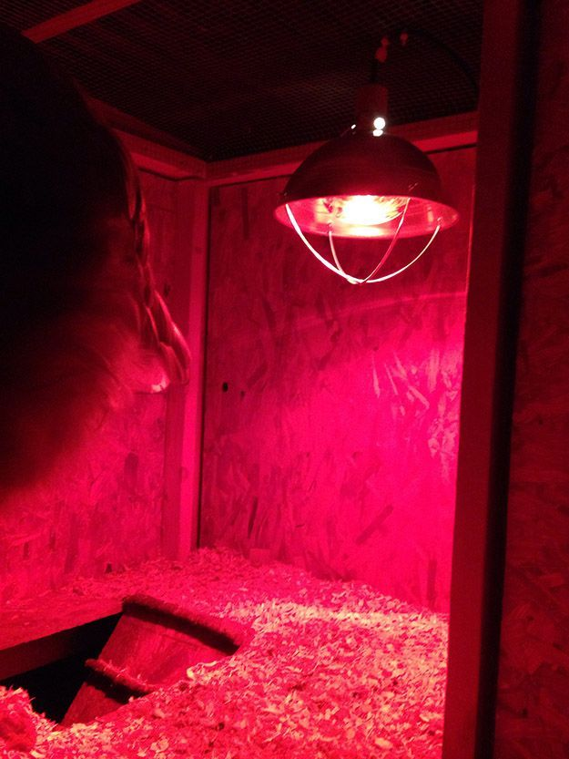 7 Tips For Heat Lamp Safety Dog House Heater Chickens Backyard Goat Barn