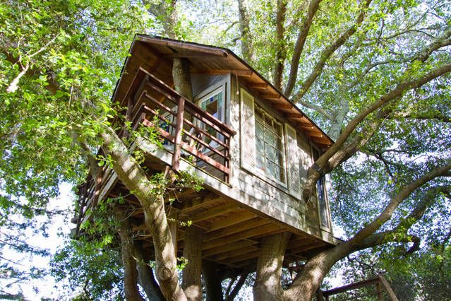 Treehouse Above San Francisco Bay | Airbnb Mobile