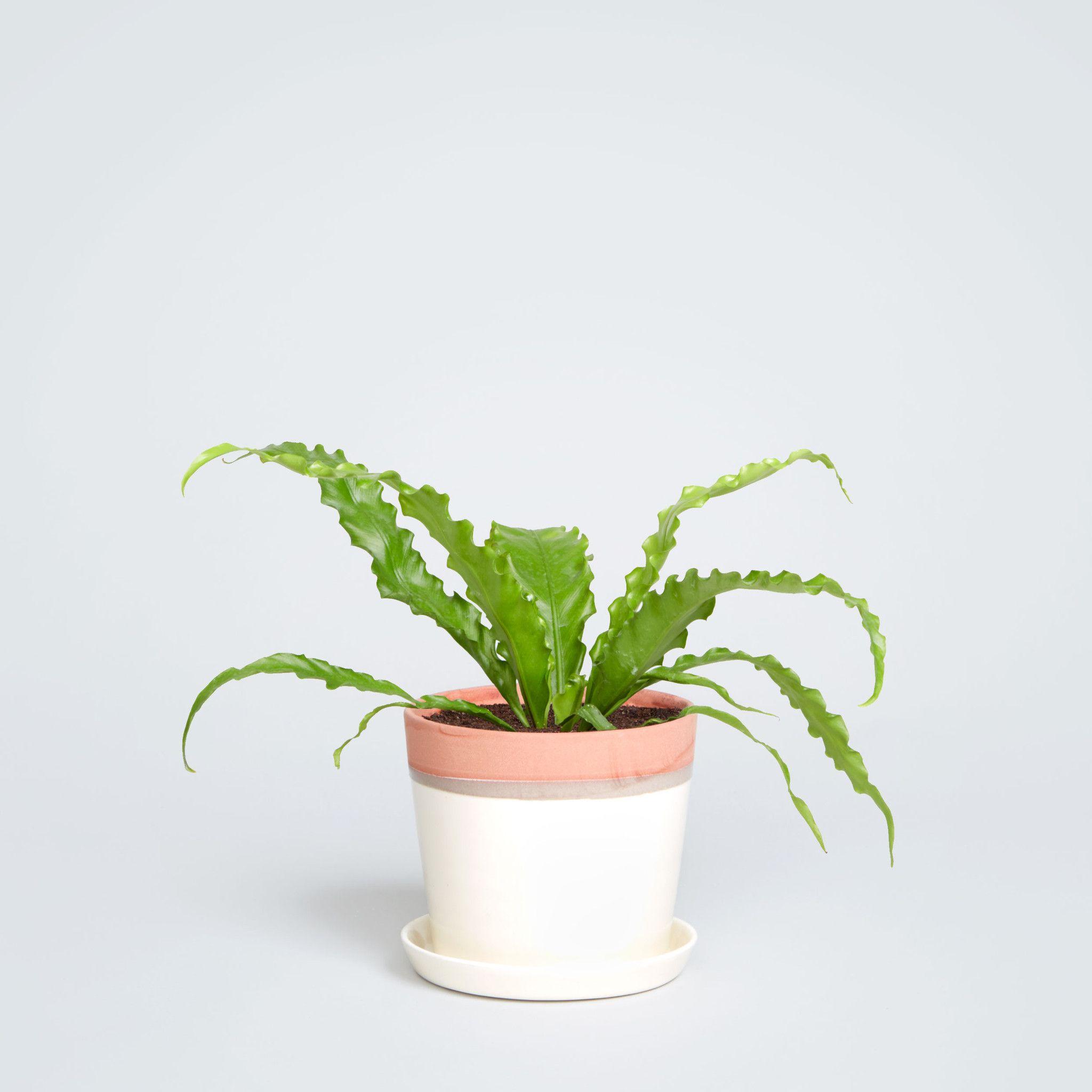 August Planter Best Bathroom Plants Bathroom Plants Plants 400 x 300