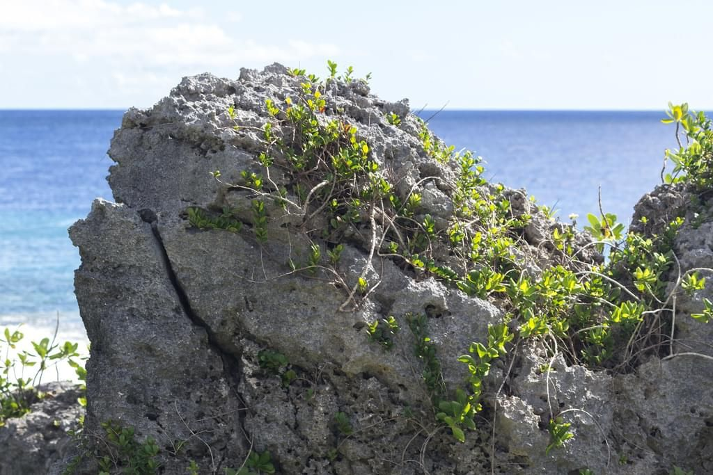 160 photos of Coral Cliffs Cove   Coastal Reference Packs