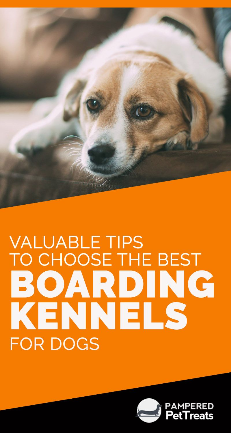 Valuable Tips To Choose The Best Boarding Kennels For Dogs Dog