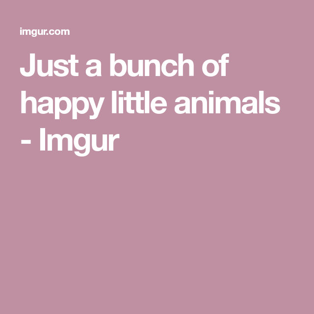 Just a bunch of happy little animals - GIFs