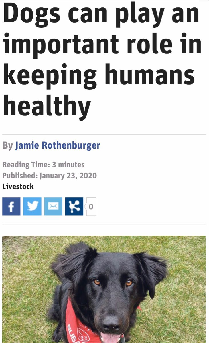 #dogtraining #dogsofinstagram #dogstagram #dogcare #healthtips #healthcare #puppy