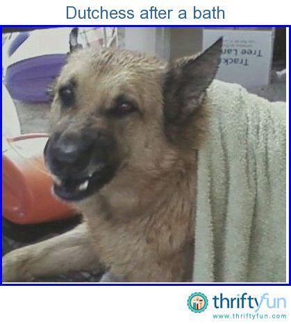 Bathe A Dog With Tea Tree Oil And Dawn Tea Tree Oil Dogs
