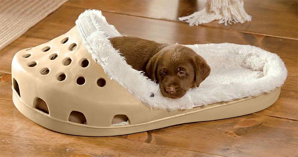 A Shoe Shaped Dog Bed Dog Bed Crocs Unique Dog Beds