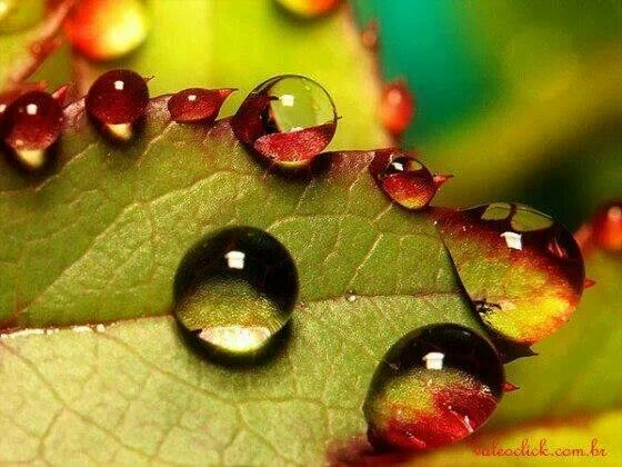 Water droplets Via Beate