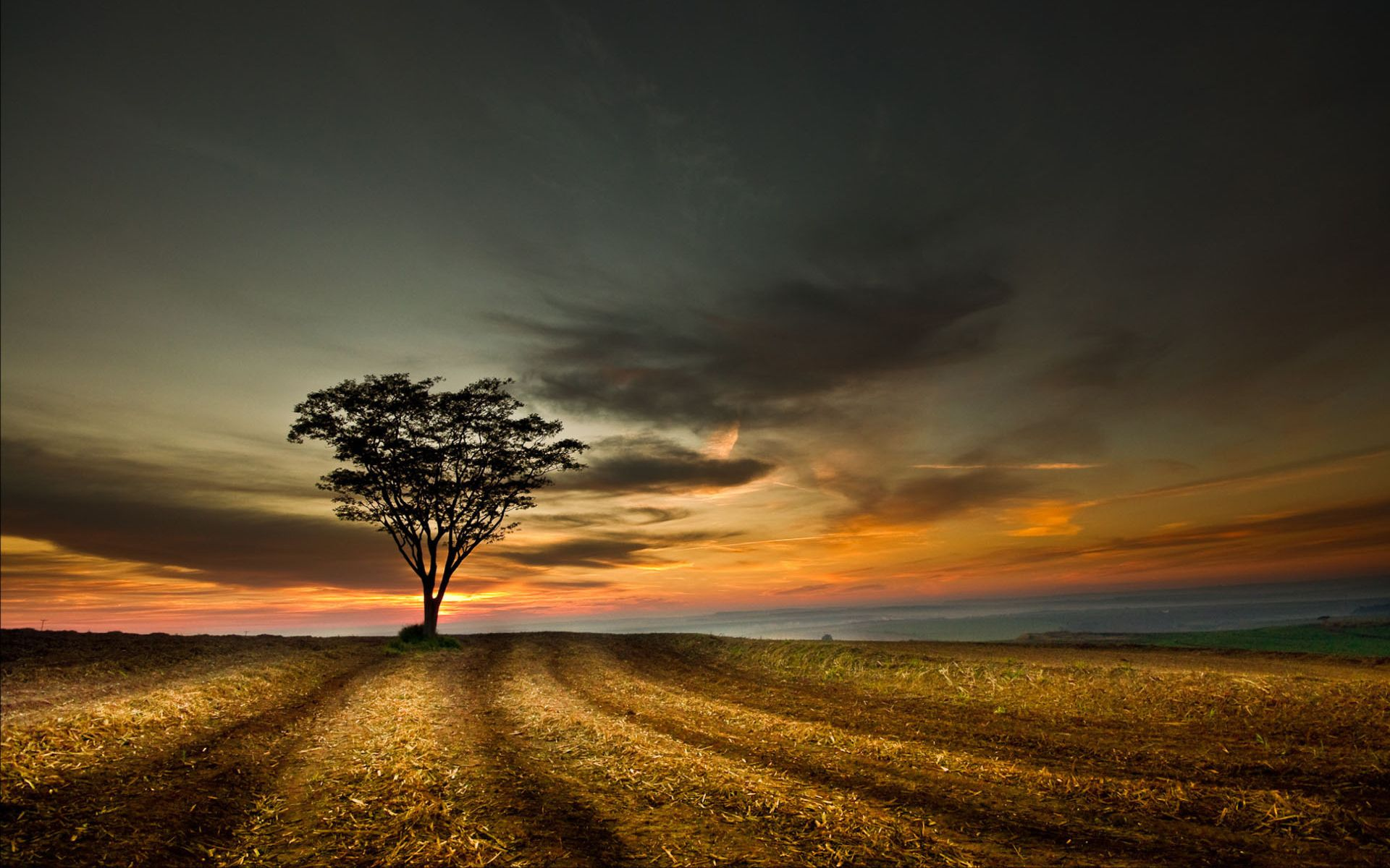 Tree of the fields