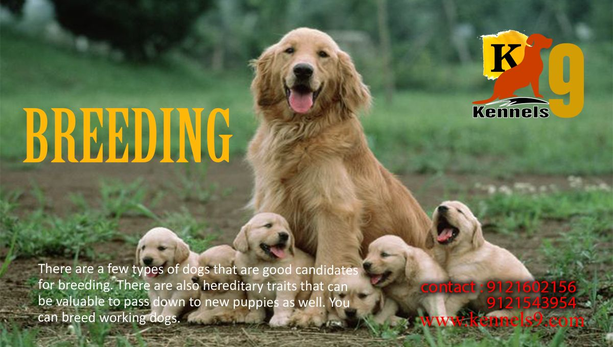 Dog Breeding Near Me Sainikpuri Hyderabad Dog Breeds Dogs Dog Spa