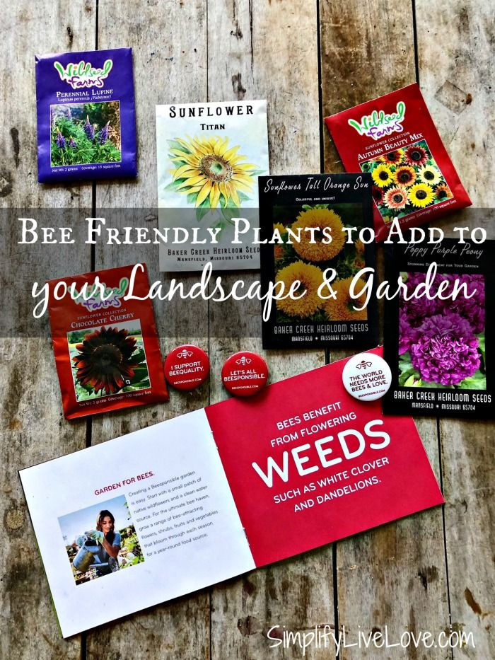 Add a few of these bee friendly plants to your garden and landscape this spring and help save the bees. It's easy to #Beesponsible with these great ideas. AD #savethebees #beefriendlygarden