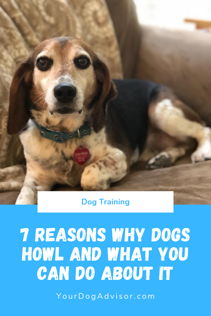7 Reasons Why Dogs Howl And What You Can Do About It Dog Psychology Dogs Dog Training