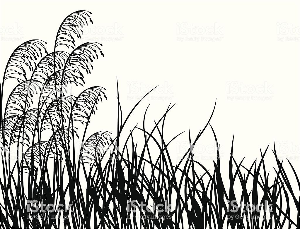 Meadow Grass Vector Illustration In