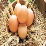 Ruyada Organik Yumurta Gormek Yumurta Saglikli Saglikli Gidalar