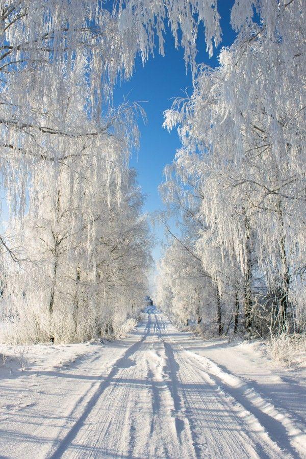 Lckdwnhvn...ice storm cometh
