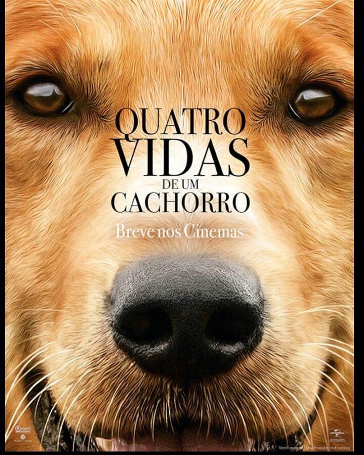 Não Adianta Você Vai Chorar Com Esse Filme Cachorro Dog Amigos