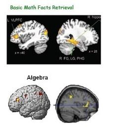 Recuperación de datos vs Resolución de problemas, implicaciones para nuestro cerebro. Neuroaprendizaje
