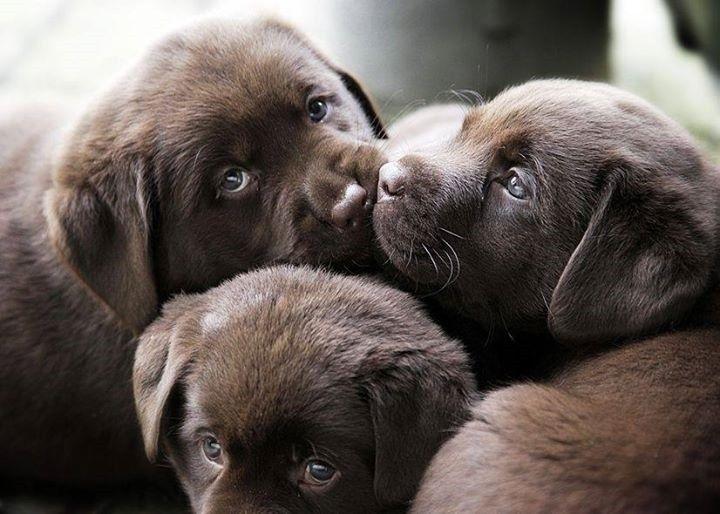 Labrador Bambini ~ Pin by flora fauna on donne bambini animali pinterest
