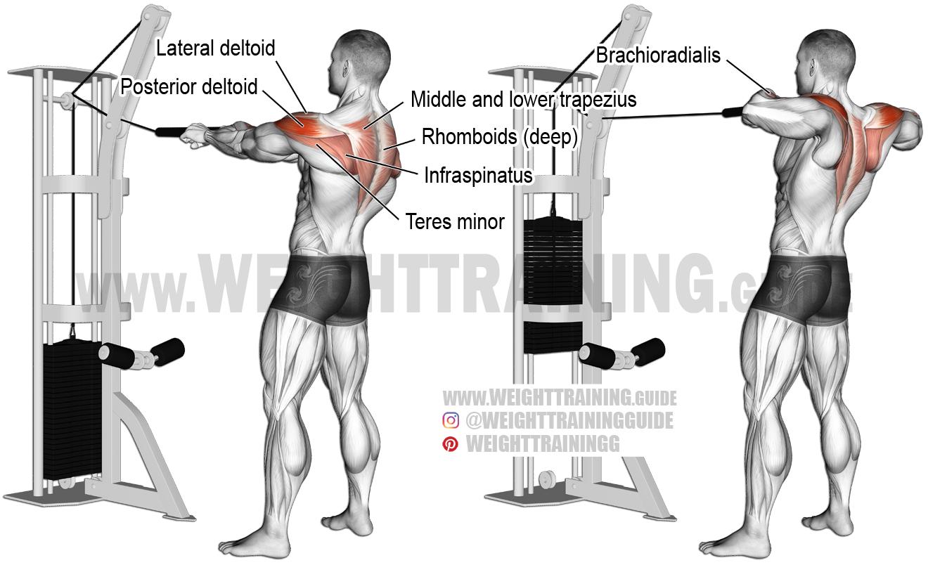 201 Pingl 233 Par Nicolas Sur Muscu Musculation Exercice