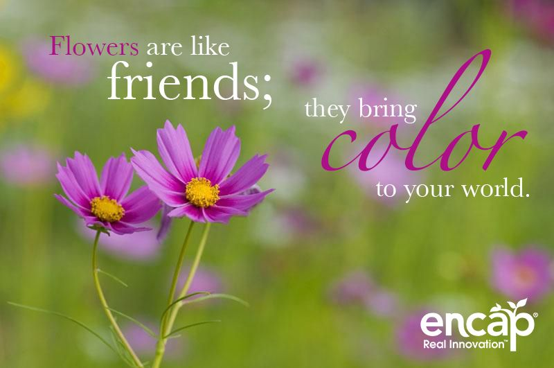 Flowers are like friends; they bring color to your world