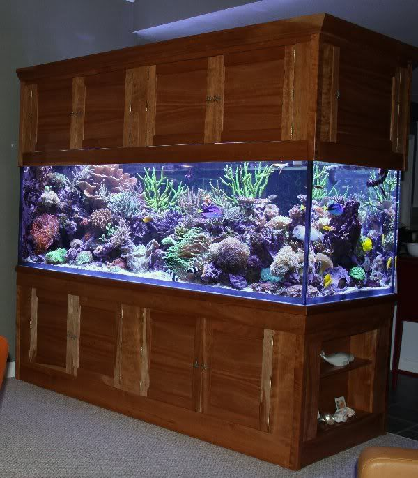 500 Gallon Custom Tank Stand Canopy For Sale For 6 500 The Stated Price Excludes The Lumenarcs I Am Saltwater Aquarium Tanks Aquarium Fish Tank Tank Stand