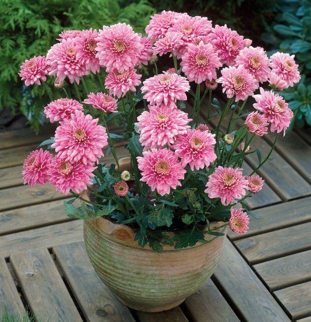 полив садовых цветов