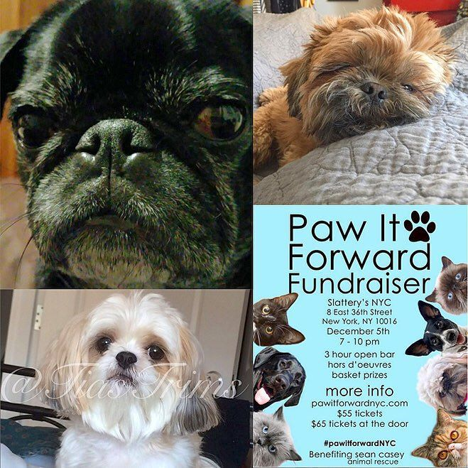 Congratulations @lennythepugnyc! You've won a ticket to the #PawItForwardNYC fundraiser ($55 value).  Thank you @boo_boo_boo_dog @tiastrims for participating we're going to donate $55 directly to @nyanimalrescue in your names!  _ Join us for the#PawItForwardNYC fundraiser on Sat Dec 5th to benefit Sean Casey Animal Rescue@nyanimalrescue.  20% of the ticket price will go directly to@nyanimalrescuePLUS enjoy a 3 hour open bar hors d'oeuvres and 5 raffle tickets. _ This event is for hoomans…