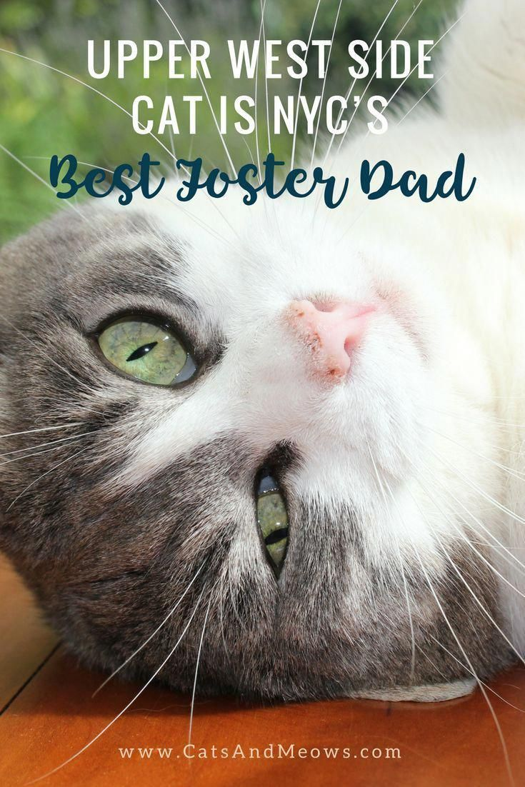 Upper West Side Cat is NYC's BEST Foster Dad Cats